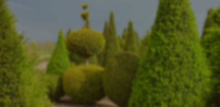 Shapes / Topiary