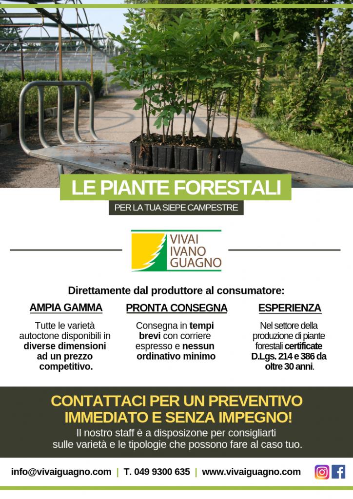 piante-autoctone-forestali-psr-veneto
