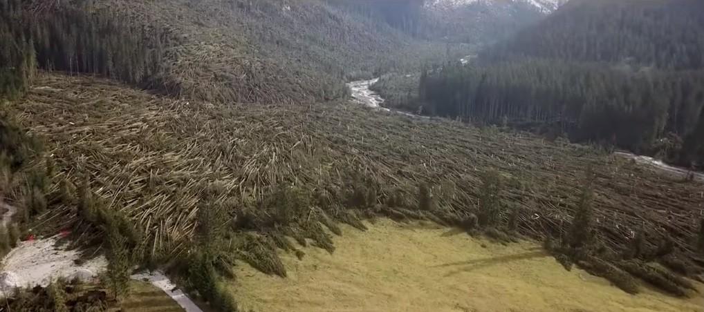 fiera della foreste tempesta vaia