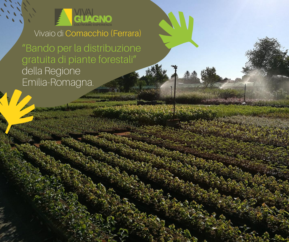 bando regione emilia romagna piante forestali gratis gratuite