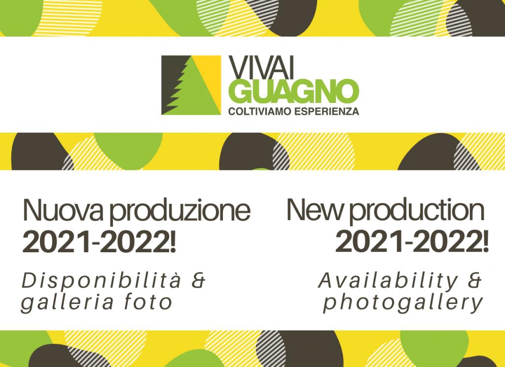 Vivai Guagno_Nuova produzione